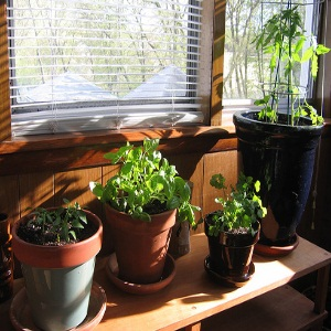 7 Important Factors for a Successful Indoor Herb Garden