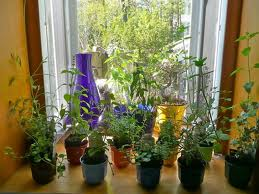 A Step By Step Guide For An Indoor Herb Garden