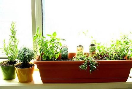 Apartment Indoor Herb Garden