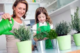 How To Make Indoor Herb Garden Plantation Easy And Maintenance Free