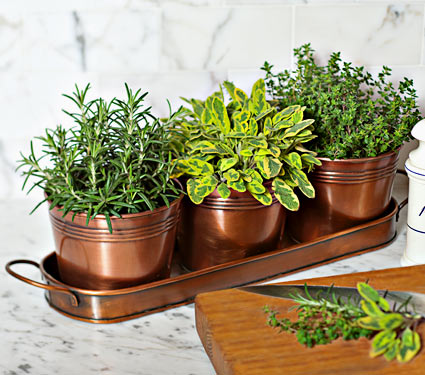 How to Design a Successful Indoor Herb Garden