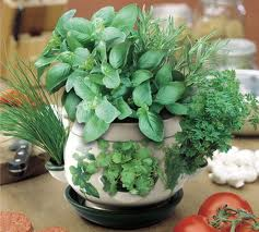 Indoor Herb Garden | The Guide To Grow Your Kitchen Herbs With Ease