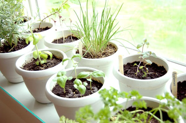 People Who Can Benefit From Indoor Herb Garden
