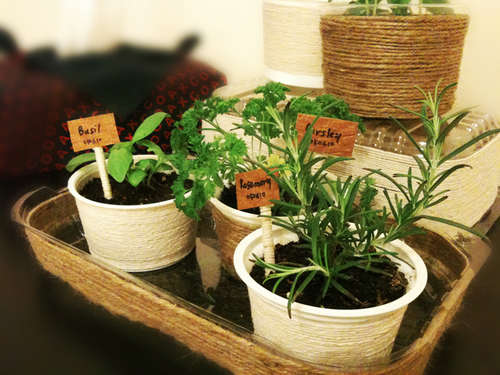 Starting an Indoor Herb Garden