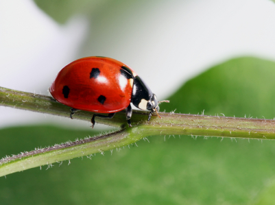 Beneficial Insects for Your Indoor Herb Garden