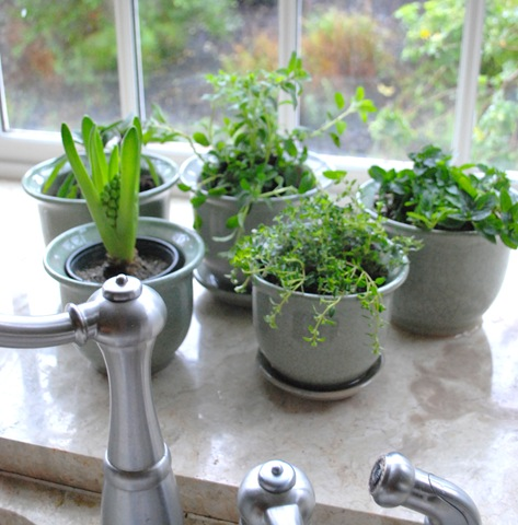 How To Make An Indoor Herb Garden Indoor Herb Garden