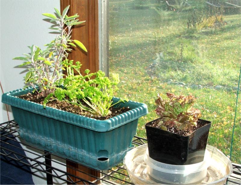 Indoor kitchen herb garden indoor herb garden for Indoor gardening ventilation