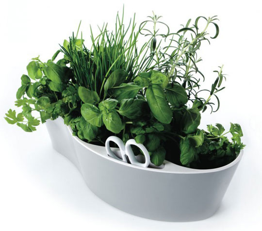 One-Pot Indoor Herb Garden