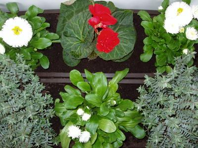 What Benefits You Can Derive From An Indoor Herb Garden