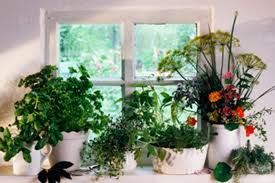 A Winter Garden Serving You Palatable Herbs To Make Your Food More Delicious & Healthy