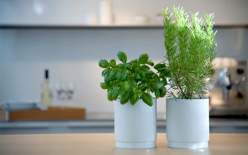 Benefits of Growing Indoor Herbs