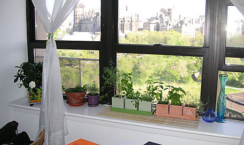 General Information about Indoor Herb Garden