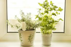 Palatable Herbs To Make Your Food More Delicious & Healthy
