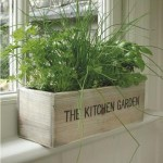 Tips for Growing an Indoor Herb Garden during Winter Season.jpg