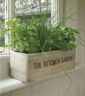 Tips for Growing an Indoor Herb Garden during Winter Season