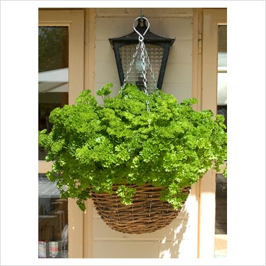Advantages of a Hanging Basket Herb Garden