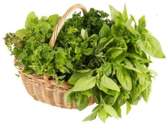 Growing Herbs in a Hanging Basket