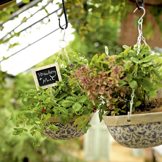 Herbs to Grow in a Hanging Basket