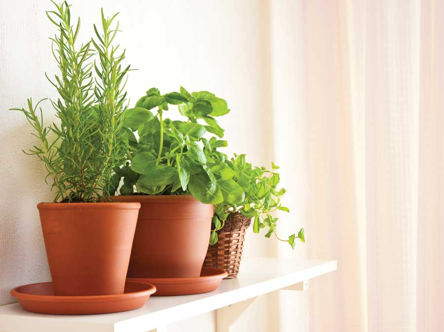 Tips for an Indoor Herb Garden