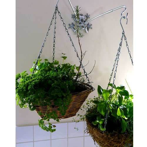 Hanging Basket Herb Garden for the Kitchen