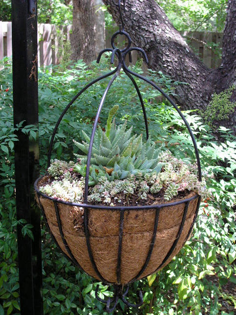 Planting Using Wire Hanging Basket