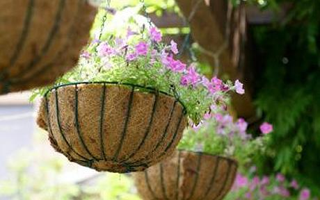 Maintaining Hanging Baskets