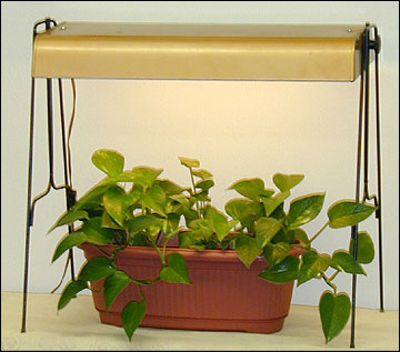 Growing Herbs under Artificial Light