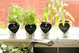 Indoor Herb Garden with Artificial Lights